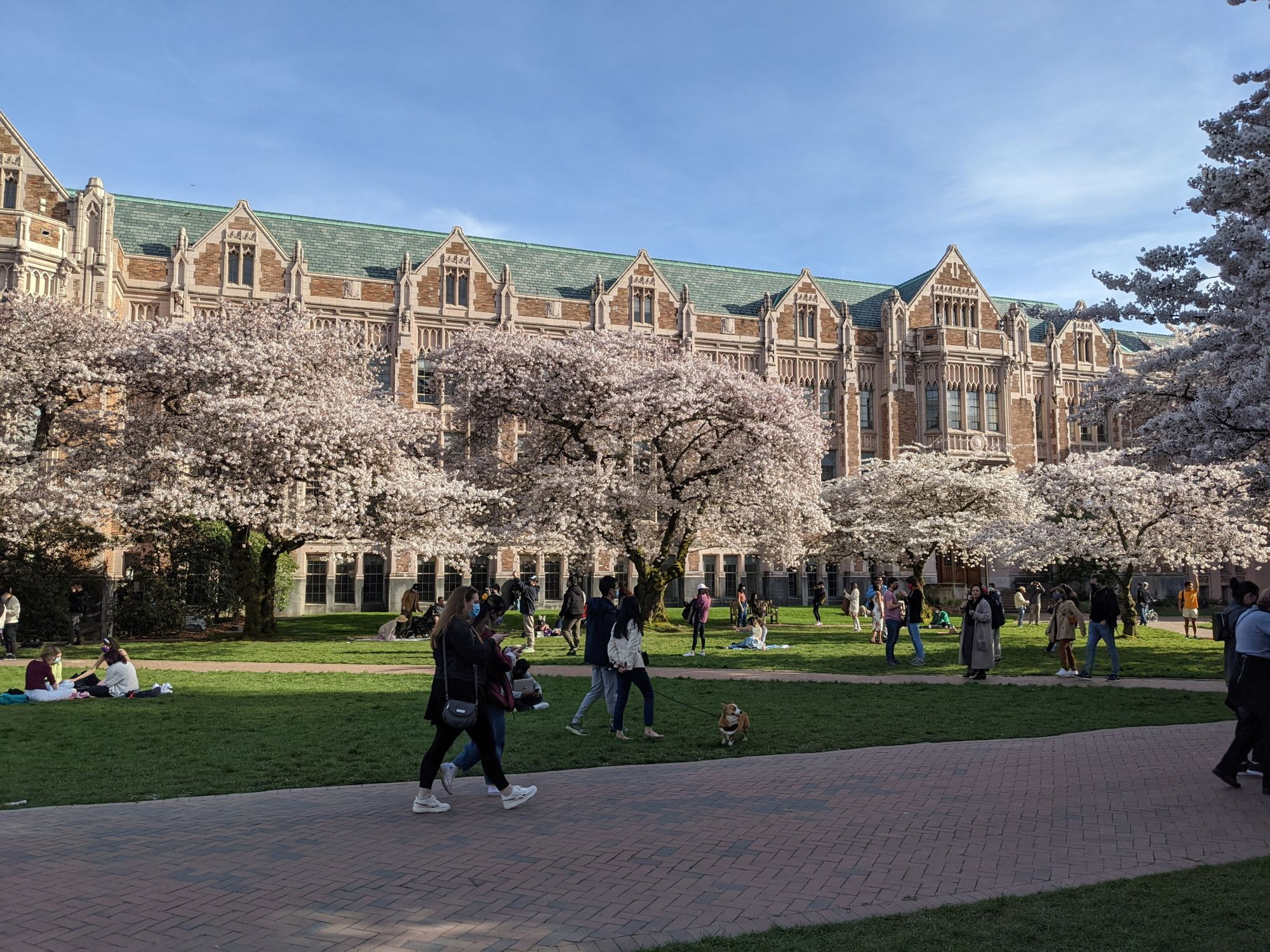 学校的樱花广场